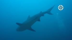 Scuba Diving in Costa Rica